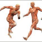 インナーマッスルと体幹の違いを理解してトレーニングを行うと効果は変わってくる!?